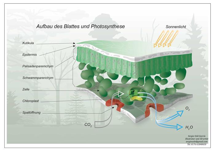 fotosintesis email